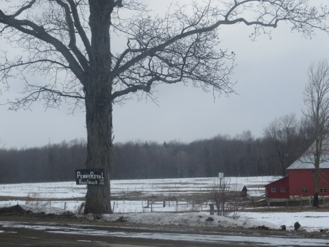 Winter view of the site of the Pennyroyal Race Track