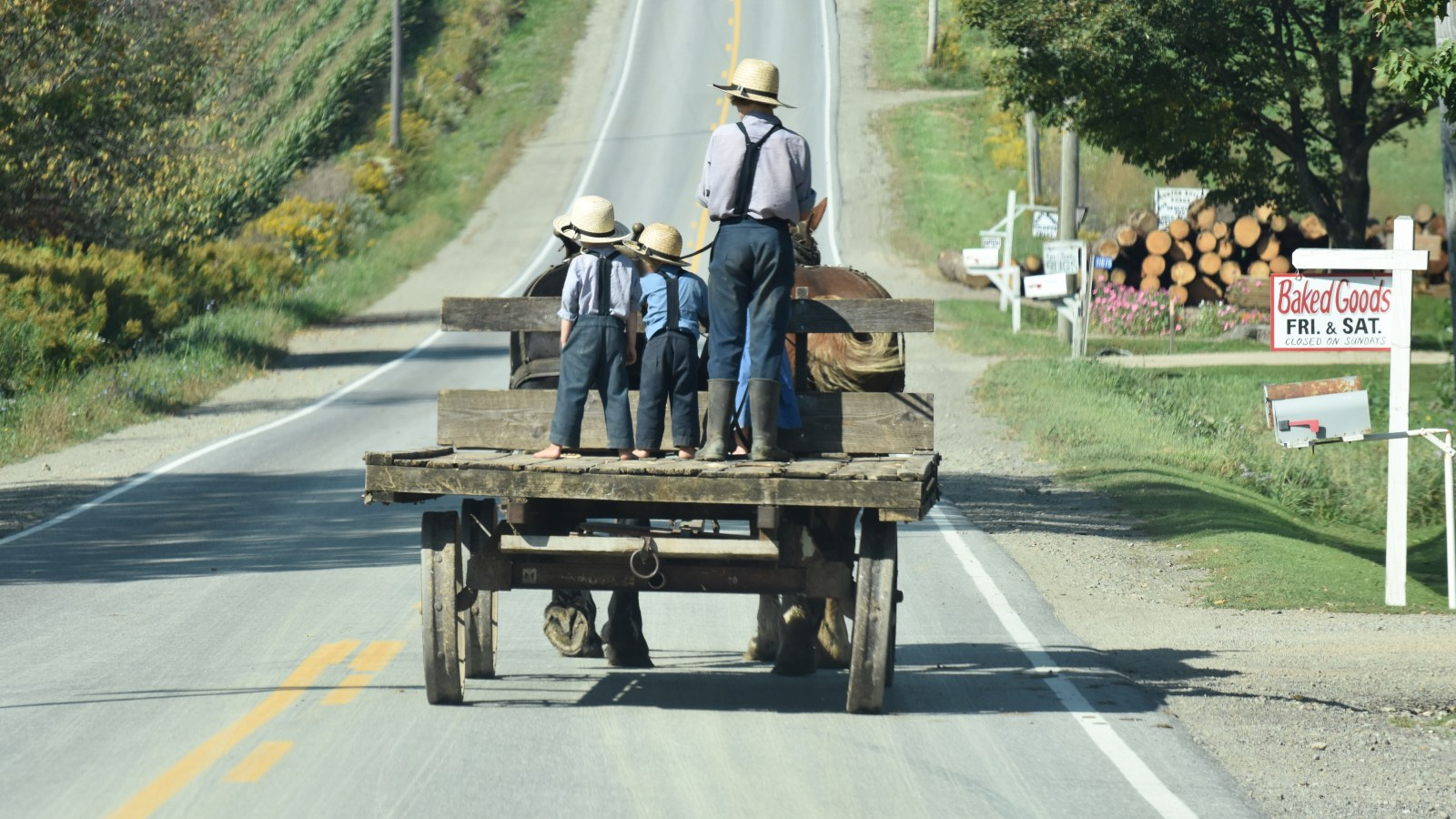 Amish Boys on Wagon