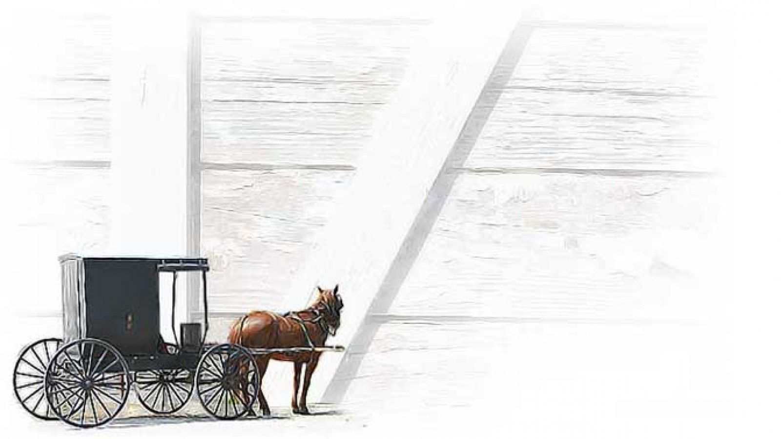 Amish Buggy and horse with faded white-washed boards in the background